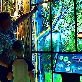 """The World of Wood"" Interactive Exposition for Darwin Museum"